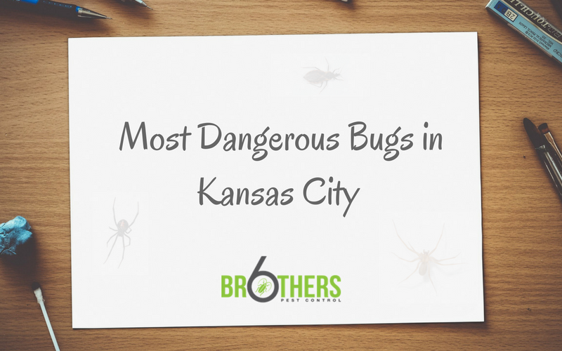 Dangerous Bugs In Kc Six Brothers Pest Control
