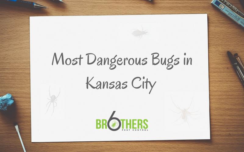 Dangerous Bugs in KC