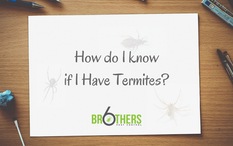 How do i know if i have termites