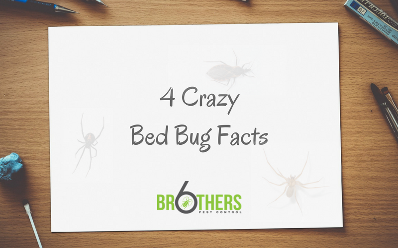 crazy bed bug facts
