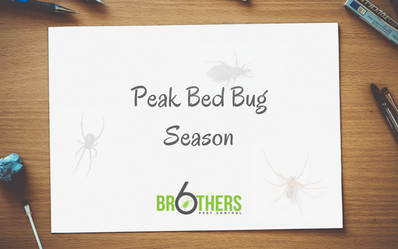peak bed bug season