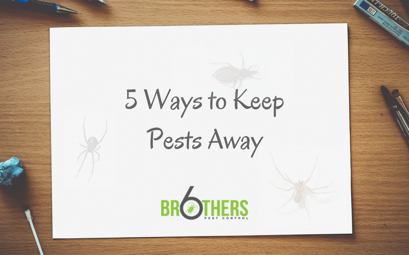 5 ways to keep pests away