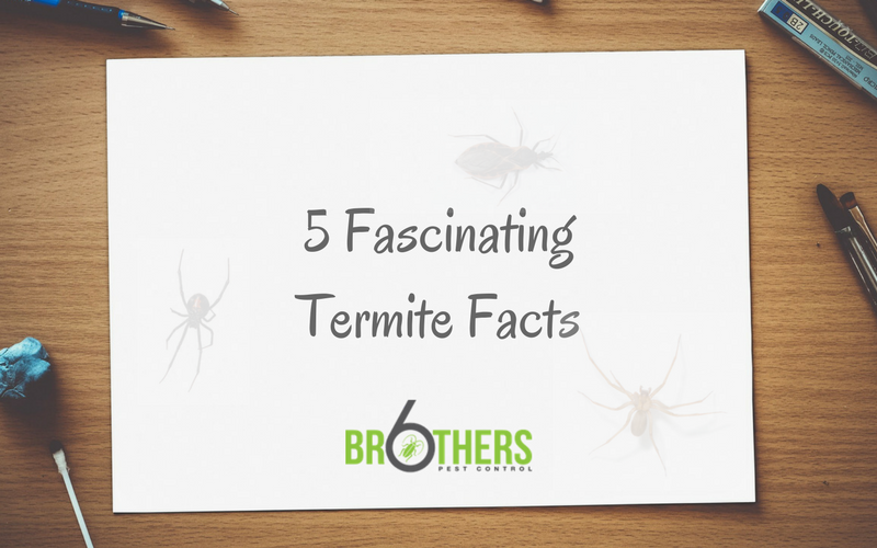 Five Fascinating Facts About Termites