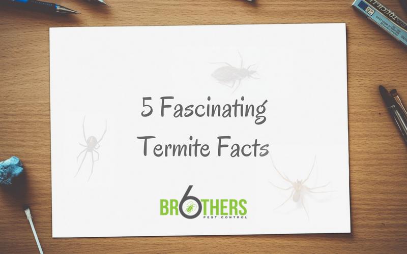 5 fascinating termite facts