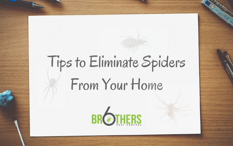 tips to eliminate spiders from your home