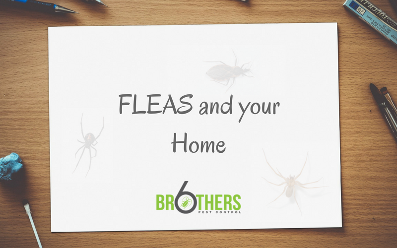 Fleas and Your Home