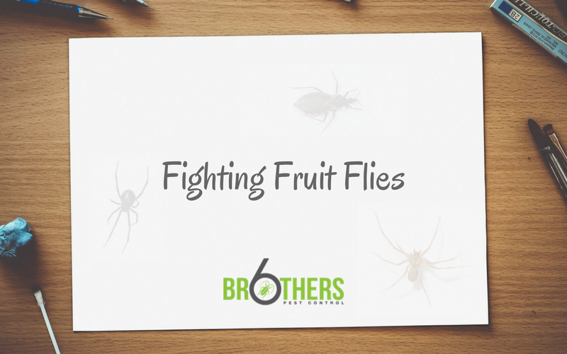 fruit fly introduction Introduction: easy fruit fly trap by nofiller follow more by the author: i used to make the inverted cone type traps but one day i didn't have any tape so.