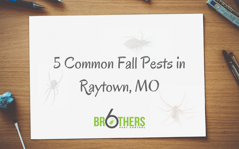 5 Common Fall Pests in Raytown, MO