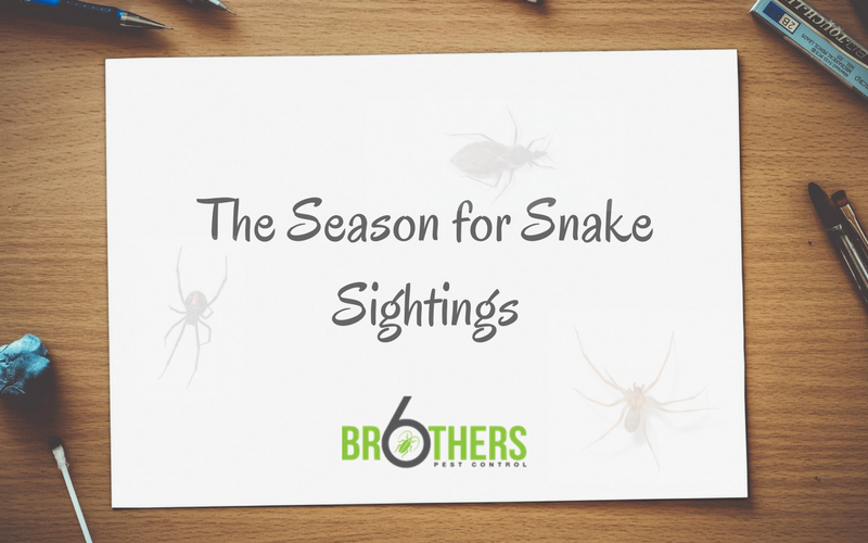 The Season for Snake Sightings