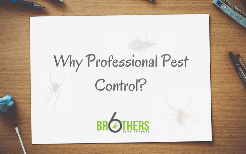 Why Professional Pest Control?