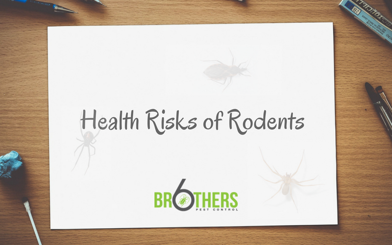 Health Risks of Rodents