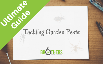 Tackling Garden Pests Naturally: The Ultimate Guide