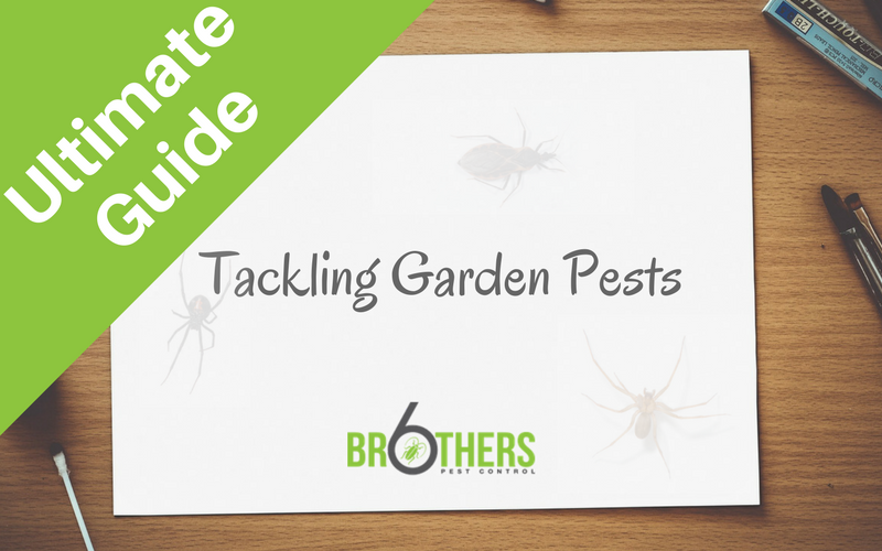 Tackling Garden Pests Naturally: The Ultimate Guide (Updated)