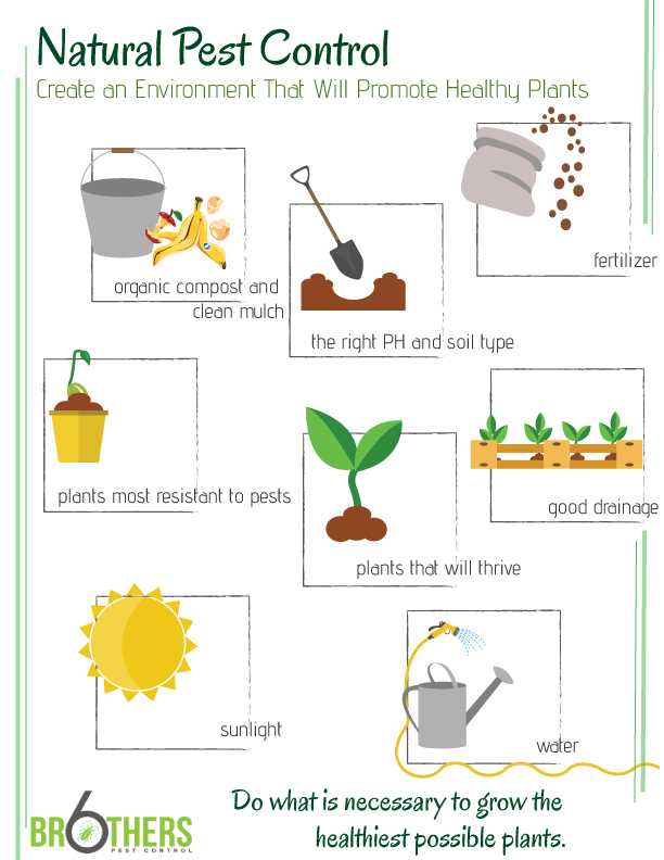 Tackling Garden Pests Naturally