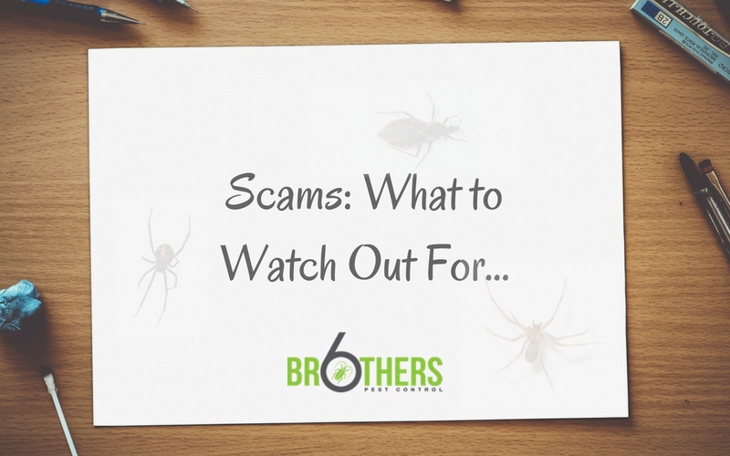 Beware Of Pest Control Scammers – What To Look Out For