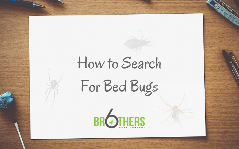 How to Search For Bed Bugs