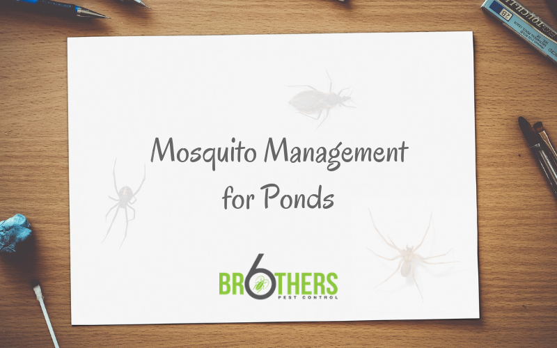 Mosquito Management For Fountains, Ponds, And Water Gardens