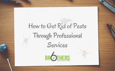 How to Get Rid Of Pests through Professional Services
