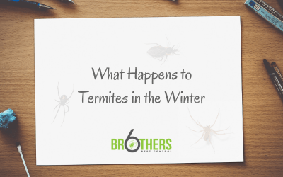 What Happens to Termites in the Winter?