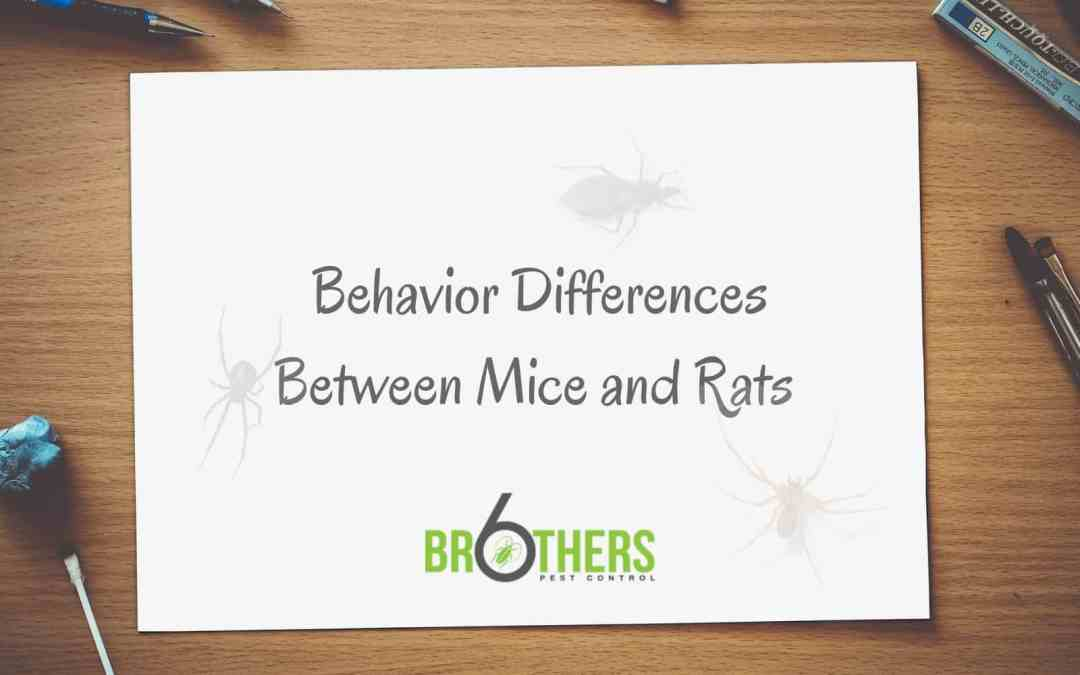 Behavior Differences Between Mice and Rats