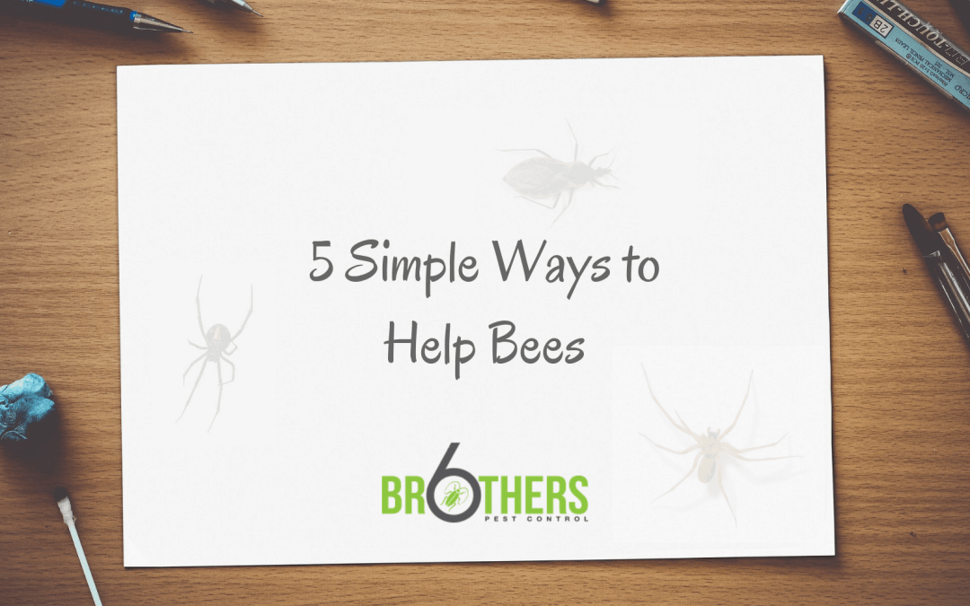 Five Simple Ways To Help Bees