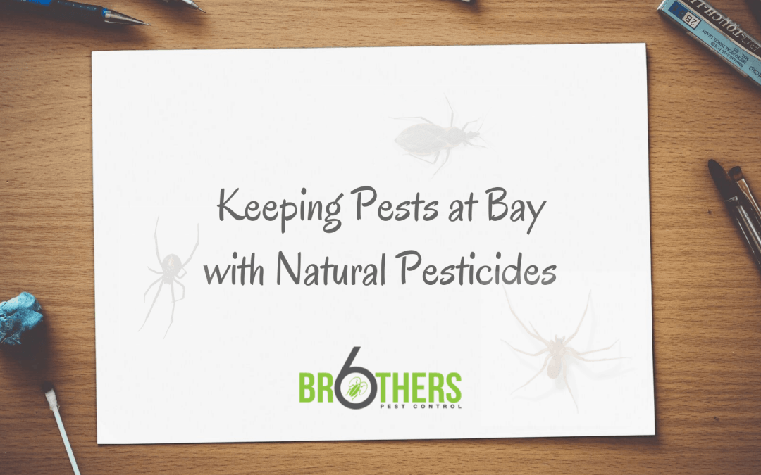 Natural Pesticides to Keep Pests Away
