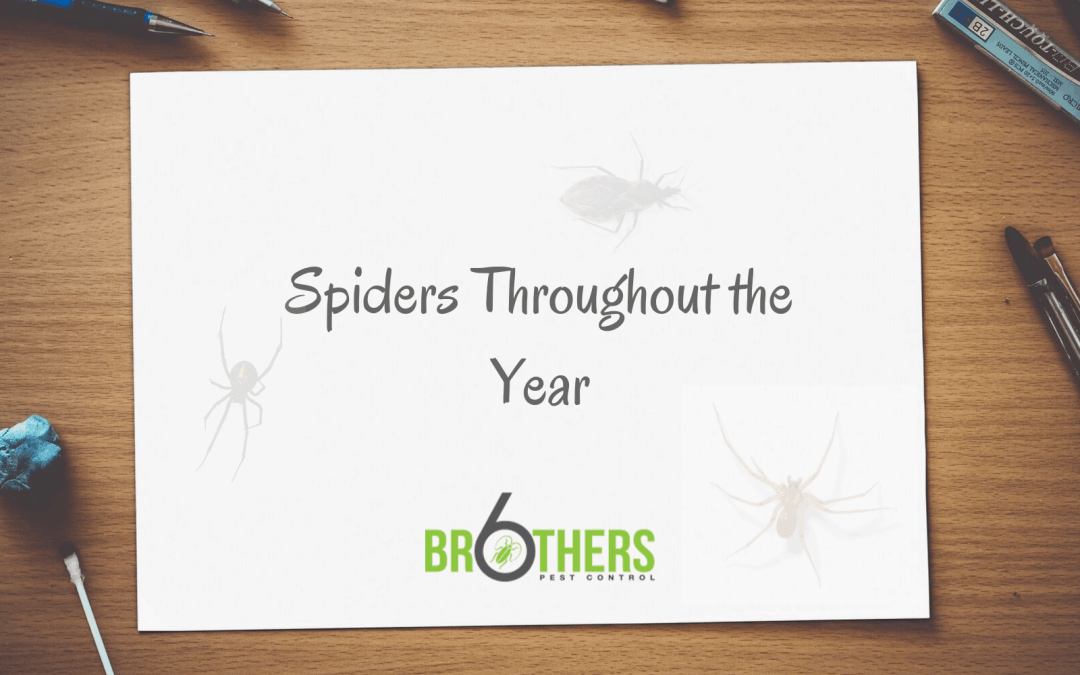 Spiders Throughout the Year