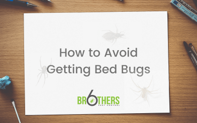 How to Avoid Getting Bed Bugs (And What To Do If You Get Them)