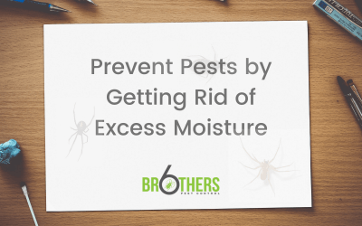 Prevent Pests by Getting Rid of Excess Moisture