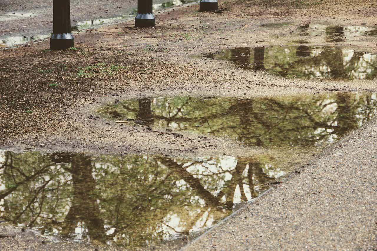 rainwater mirroring trees