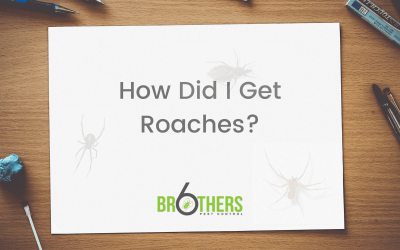 How Did I Get Roaches?