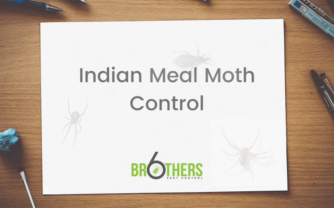 Indian Meal Moth Control