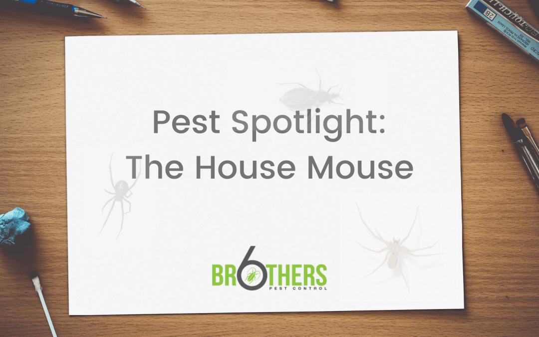 Pest Spotlight: The House Mouse