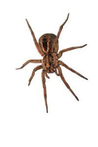 Washington Utah Spider Control