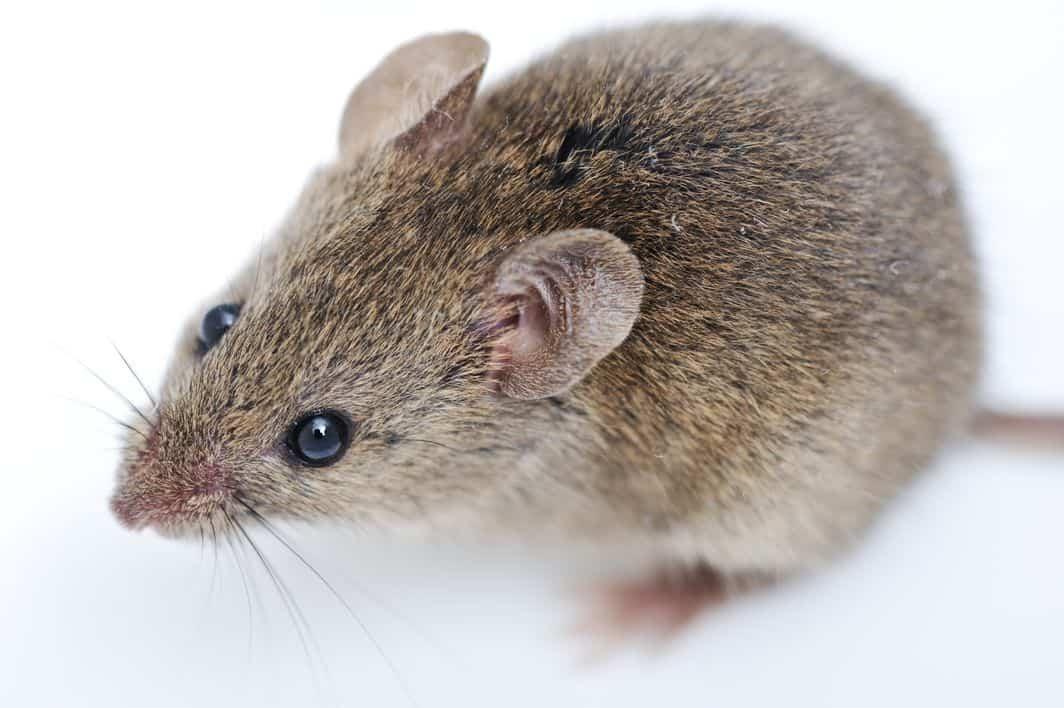 Mouse Control in Orem Utah