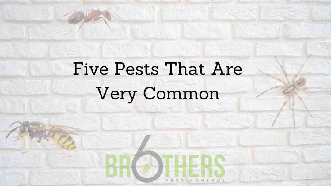 Five Pests That Are Very Common