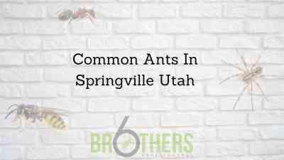 Common Ants In Springville Utah