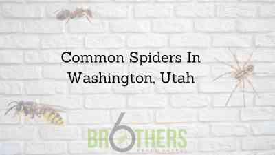 Common Spiders In Washington, Utah
