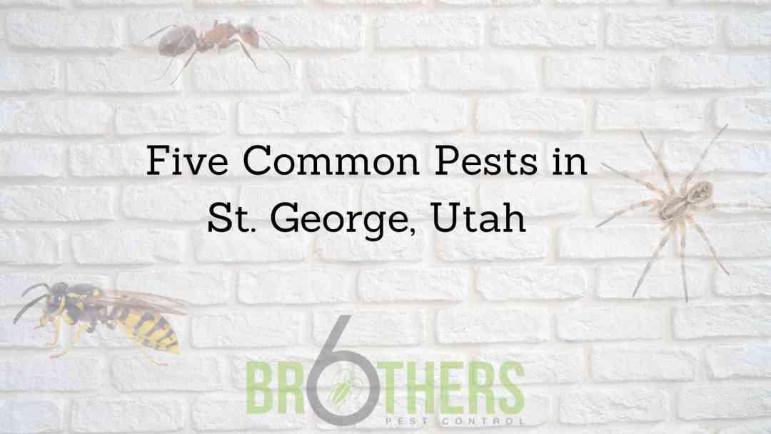 Five Common Pests in St. George, Utah