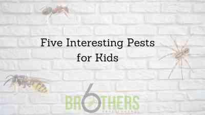 Five Interesting Pests for Kids