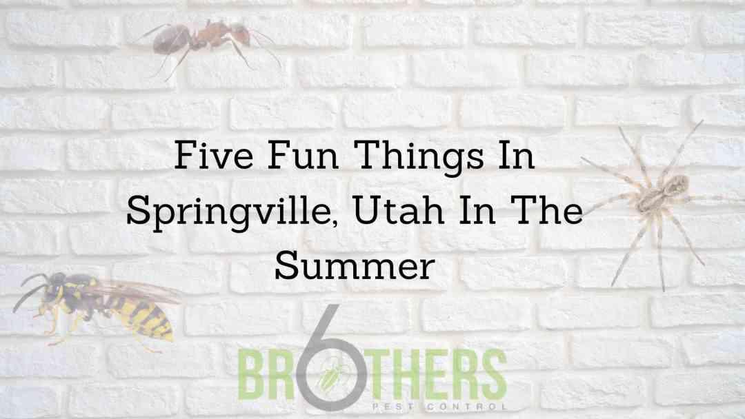 Fun things to Do in Springville Utah