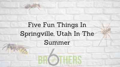 Five Fun Things In Springville, Utah In The Summer