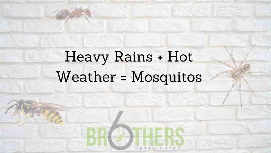 Heavy Rains + Hot weather = Mosquitos