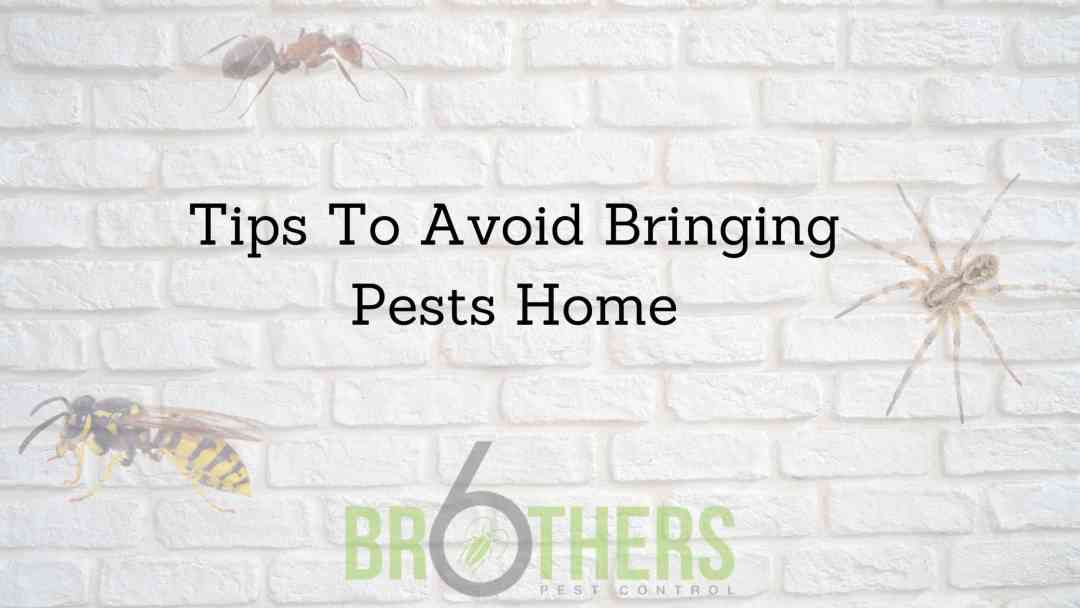 Tips To Avoid Bringing Pests Home