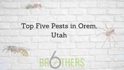 Top Five Pests in Orem, Utah