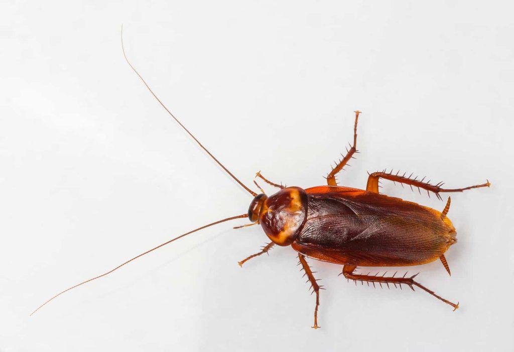 Boise Roach Control