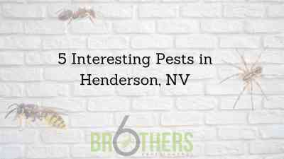 5 Interesting Pests in Henderson, NV