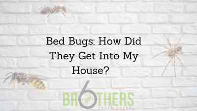 Bed Bugs: How Did They Get Into My House?